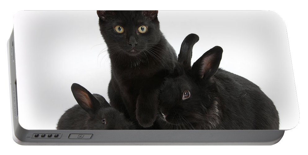 Animal Portable Battery Charger featuring the photograph Cat And Rabbits by Mark Taylor