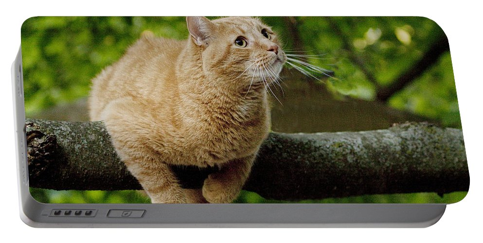 Art Portable Battery Charger featuring the photograph Cat Hanging On A Limb by Randall Nyhof