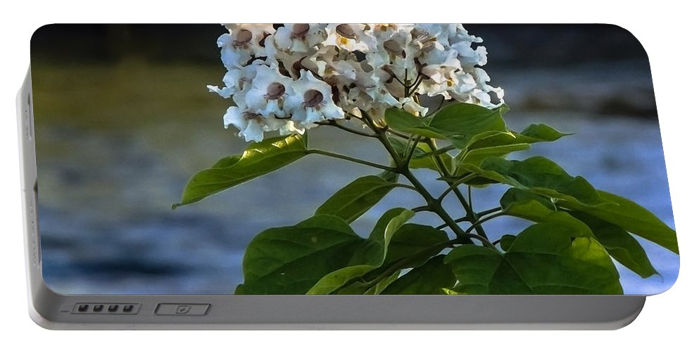 Catalpa Portable Battery Charger featuring the photograph Catalpa Beauty by Robert Bales