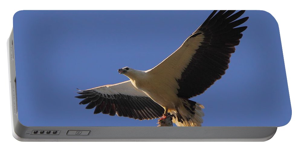 Sea Portable Battery Charger featuring the photograph Catch Of The Day - White-bellied Sea-eagle by Bruce J Robinson