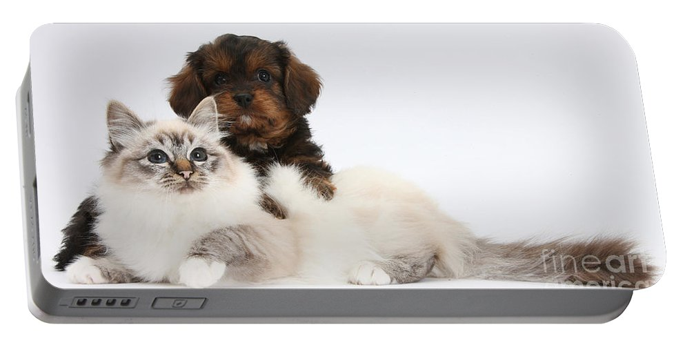Animal Portable Battery Charger featuring the photograph Cavapoo Pup And Tabby-point Birman Cat by Mark Taylor