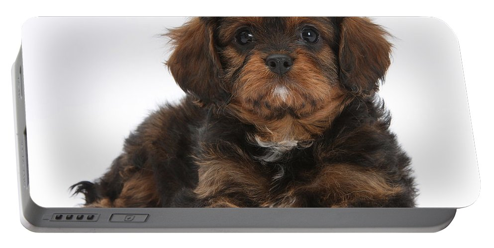 Dog Portable Battery Charger featuring the photograph Cavapoo Pup by Mark Taylor