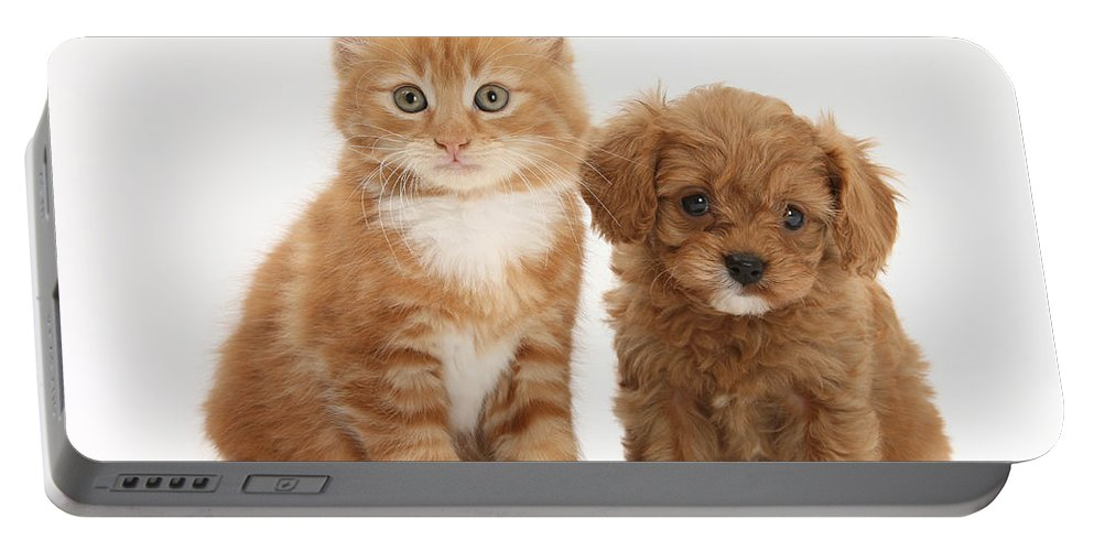Animal Portable Battery Charger featuring the photograph Cavapoo Puppy And Kitten by Mark Taylor
