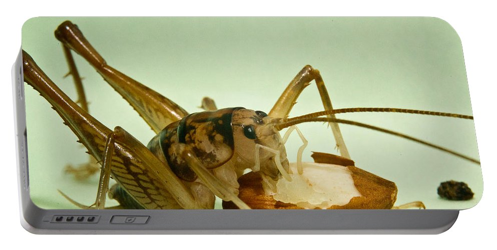Orthopteran Portable Battery Charger featuring the photograph Cave Cricket Eating An Almond 2 by Douglas Barnett