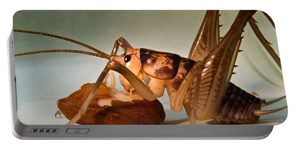 Orthopteran Portable Battery Charger featuring the photograph Cave Cricket Feeding On Almond by Douglas Barnett