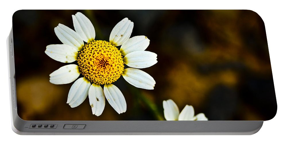 Bloom Portable Battery Charger featuring the photograph Chamomile Flower In Decay by Marc Garrido