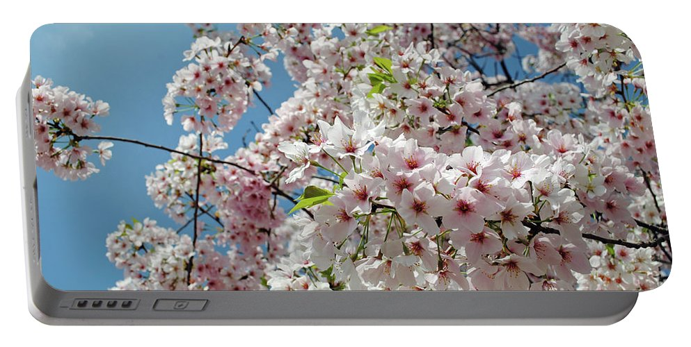 Cherry Portable Battery Charger featuring the photograph Cherry Blossoms Of The Sky by Jost Houk