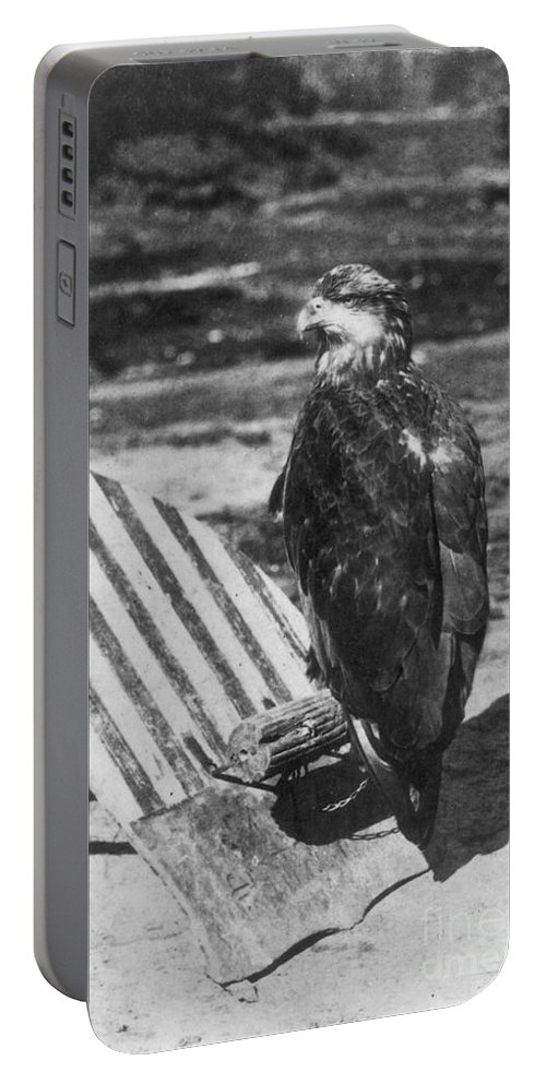 1860s Portable Battery Charger featuring the photograph Civil War: Eagle Mascot by Granger