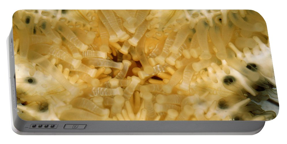 Sea Life Portable Battery Charger featuring the photograph Close-up Of A Starfish Mouth by Ted Kinsman