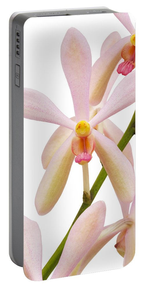 Asian Portable Battery Charger featuring the photograph Closeup Pink Orchid by Atiketta Sangasaeng