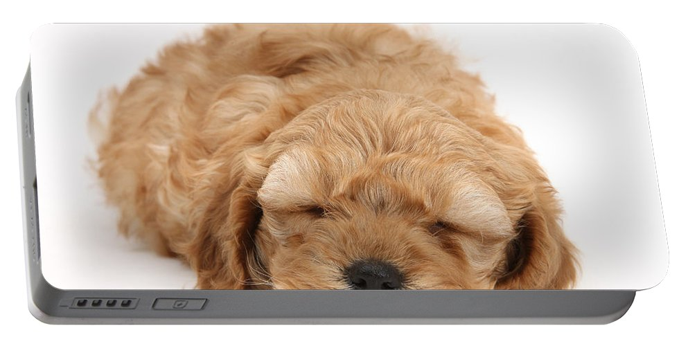Animal Portable Battery Charger featuring the photograph Cockapoo Pup by Mark Taylor