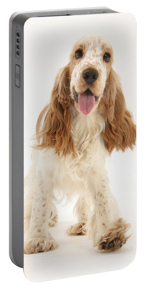 Dog Portable Battery Charger featuring the photograph Cocker Spaniel by Mark Taylor