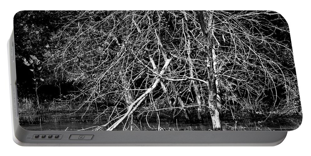 Trees In Water Portable Battery Charger featuring the photograph Coexistance by Burney Lieberman