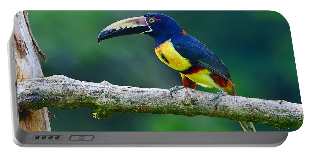 Collared Ara�ari Portable Battery Charger featuring the photograph Collared Aracari by Tony Beck