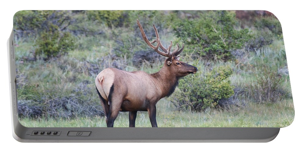 Elk Portable Battery Charger featuring the photograph Colorado Elk by David Arment
