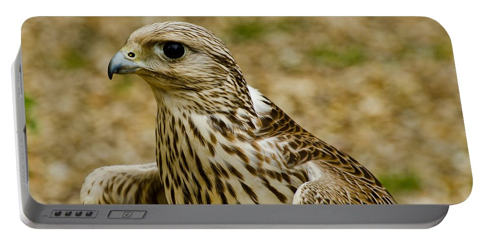 The Common Kestrel Portable Battery Charger featuring the photograph Common Female Kestrel by Chris Thaxter