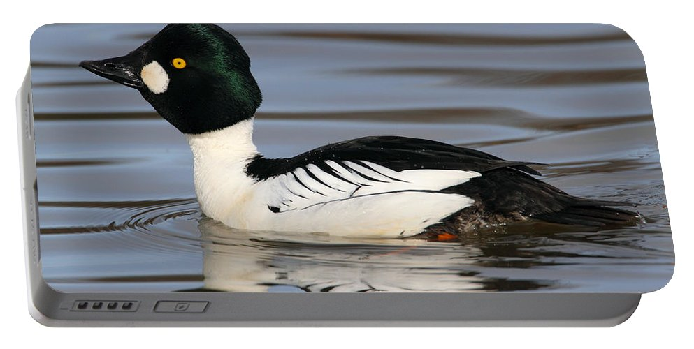 Alaska Portable Battery Charger featuring the photograph Common Goldeneye by Doug Lloyd