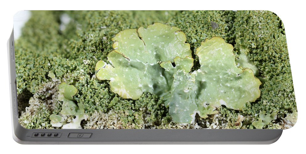 Common Greenshield Portable Battery Charger featuring the photograph Common Greenshield Lichen by Ted Kinsman