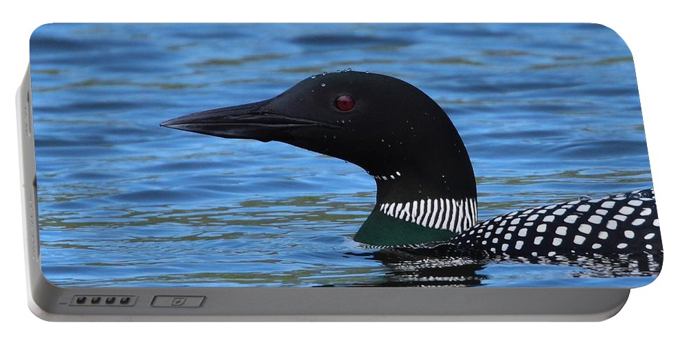 Loon Portable Battery Charger featuring the photograph Common Loon by Bruce J Robinson