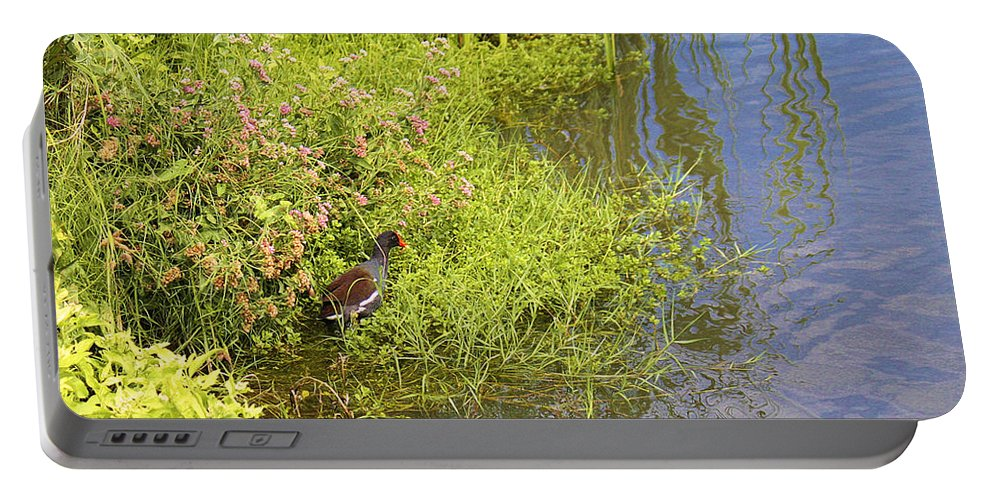 Roena King Portable Battery Charger featuring the photograph Common Moorhen At The Waters Edge by Roena King