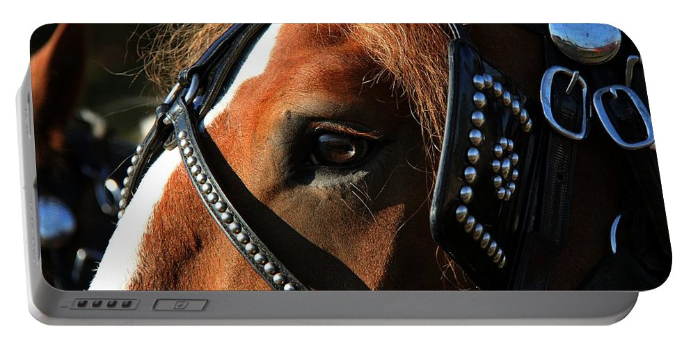 Animal Portable Battery Charger featuring the photograph Concentration by Davandra Cribbie