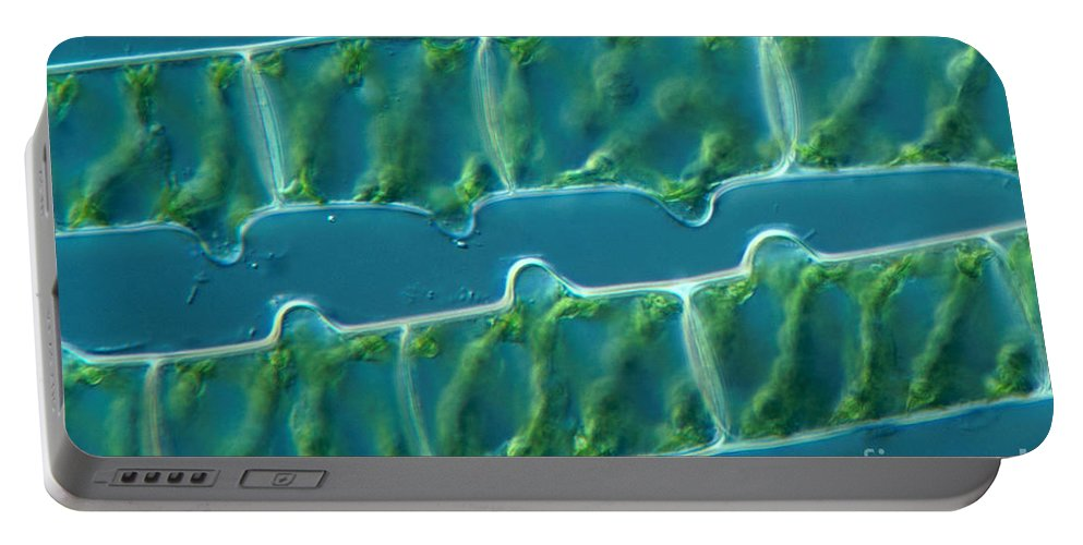 Differential Interference Contrast Microscopy Portable Battery Charger featuring the photograph Conjugation In Algae, 1 Of 4 by M. I. Walker