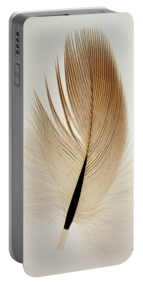 Contour Feather Portable Battery Charger featuring the photograph Contour Feather by David Salter