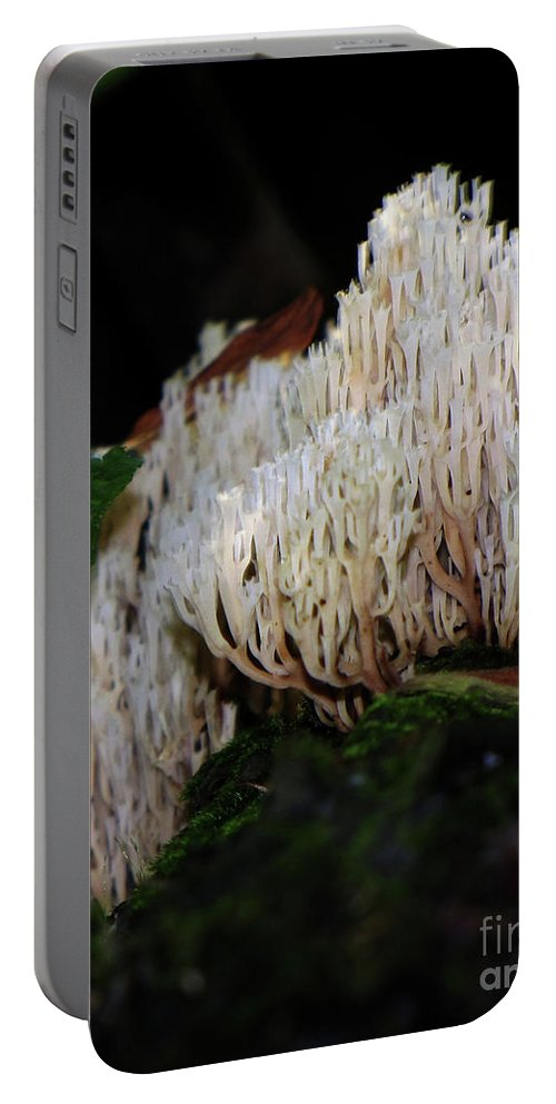 Mushroom Portable Battery Charger featuring the photograph Coral Mushroom 2 by September Stone