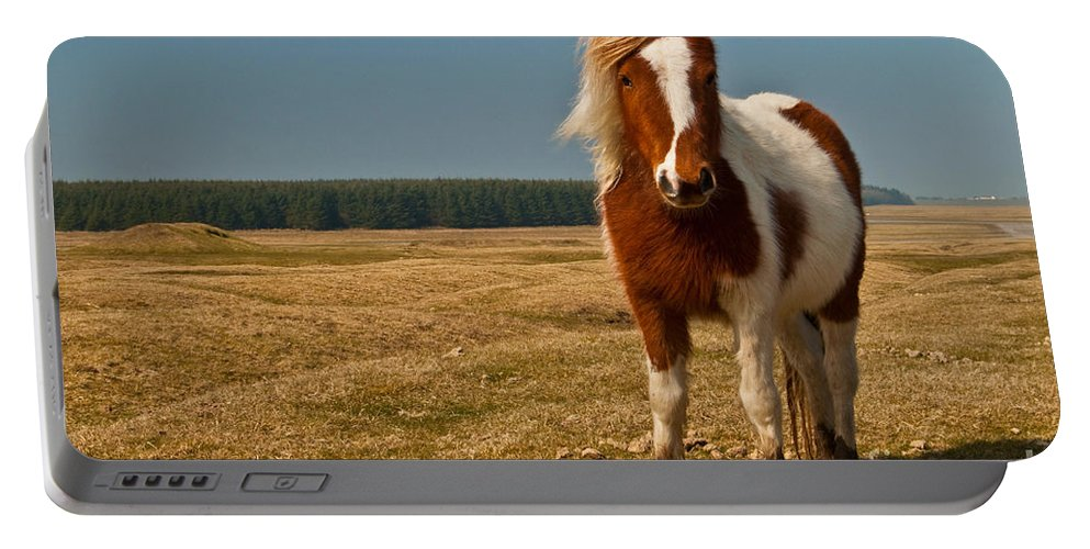 Pony Portable Battery Charger featuring the photograph Cornish Pony by Rob Hawkins