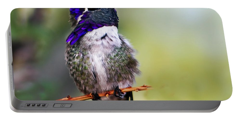 Birds Portable Battery Charger featuring the photograph Costa's by Robert Bales