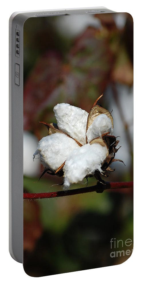 Cotton Portable Battery Charger featuring the photograph Cotton Pod 3 by Robert Meanor