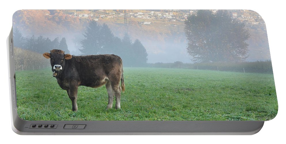 Cow Portable Battery Charger featuring the photograph Cow On The Foggy Field by Mats Silvan