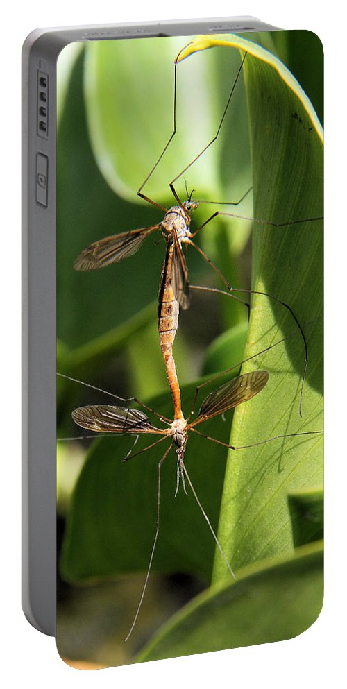 Crane Portable Battery Charger featuring the photograph Crane Flies Mating by Doris Potter