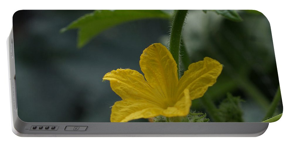 Cucumber Flower Portable Battery Charger featuring the photograph Cucumber Flower by Ernie Echols