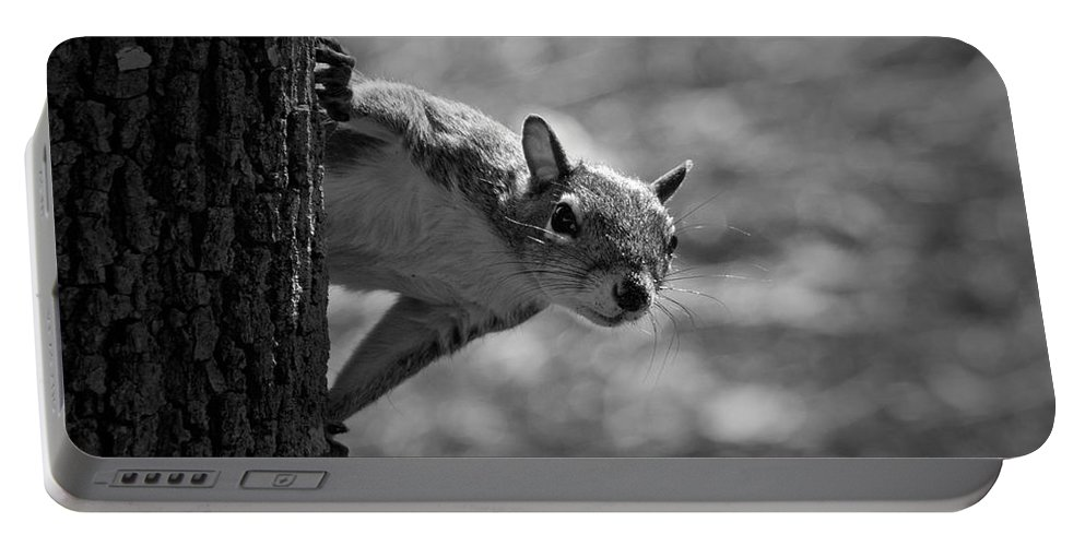 Squirrel Portable Battery Charger featuring the photograph Curious Squirrel by Mark Andrew Thomas