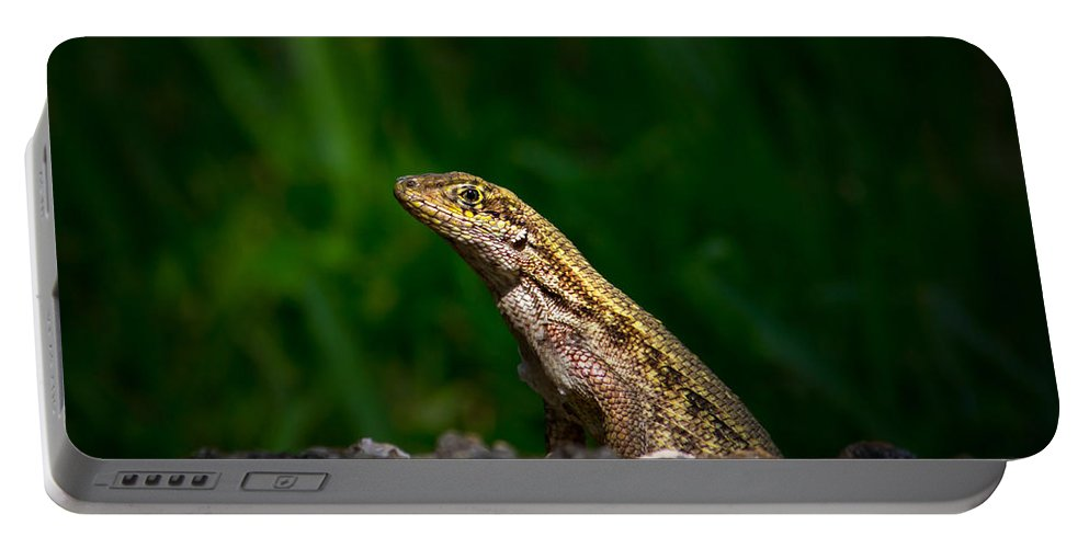 Lizard Portable Battery Charger featuring the photograph Curlytail by Mark Andrew Thomas