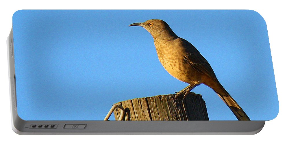 Roena King Portable Battery Charger featuring the photograph Curved Billed Thrasher Sitting On A Post by Roena King