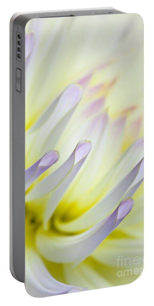 Dahlia Portable Battery Charger featuring the photograph Dahlia Flower 09 by Nailia Schwarz