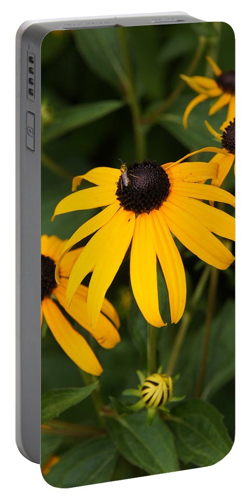 Daisy Portable Battery Charger featuring the photograph Daisies by Megan Cohen