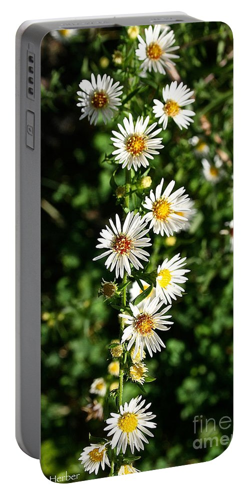 Outdoors Portable Battery Charger featuring the photograph Daisy Production Line by Susan Herber