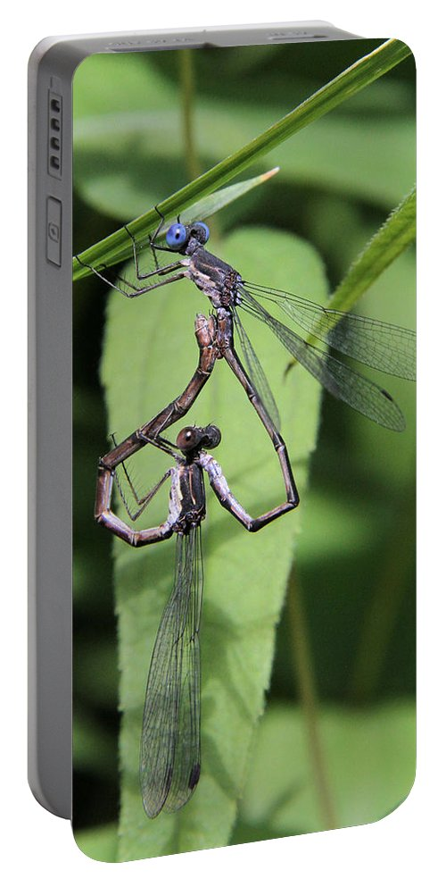 Damselfly Portable Battery Charger featuring the photograph Damselfly Love by Doris Potter