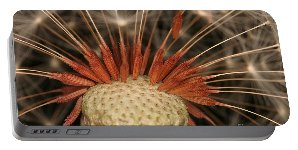 Plant Portable Battery Charger featuring the photograph Dandelion Seeds by Ted Kinsman