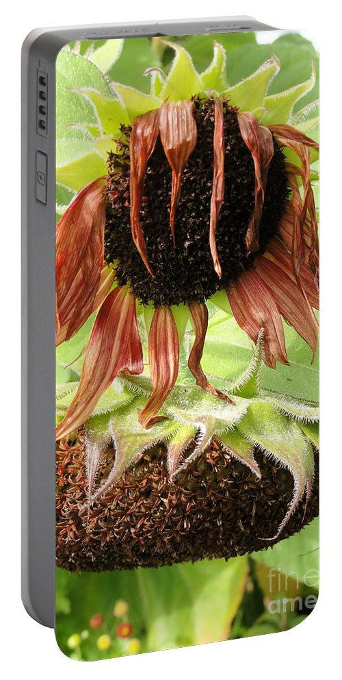 Sunflower Portable Battery Charger featuring the photograph Dawdling Days by Trish Hale