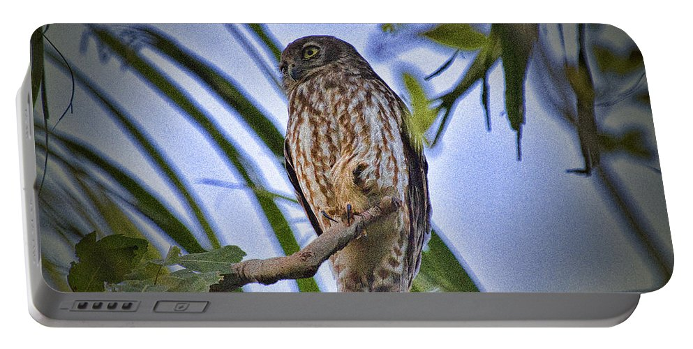 Barking Owl Portable Battery Charger featuring the photograph Daylight Shy V2 by Douglas Barnard