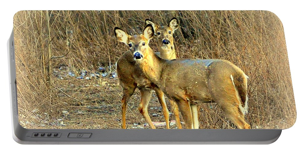 Deer Portable Battery Charger featuring the photograph Deer Duo by Marty Koch