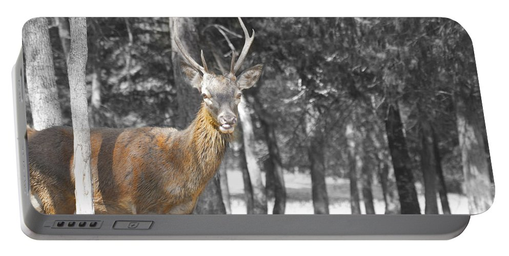 Deer Portable Battery Charger featuring the photograph Deer In The Forest by Douglas Barnard