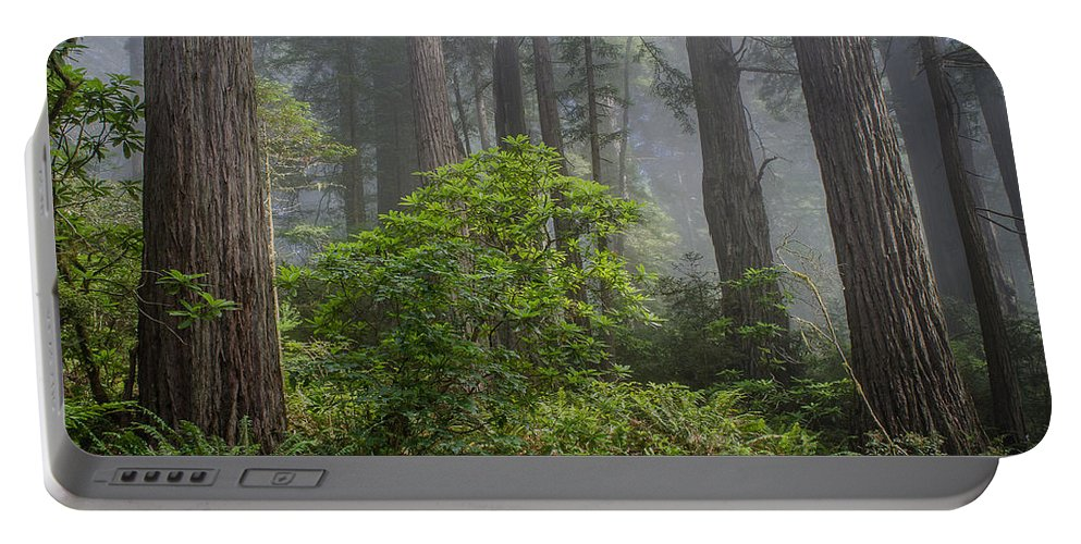 Redwoods Portable Battery Charger featuring the photograph Del Norte Redwoods by Greg Nyquist
