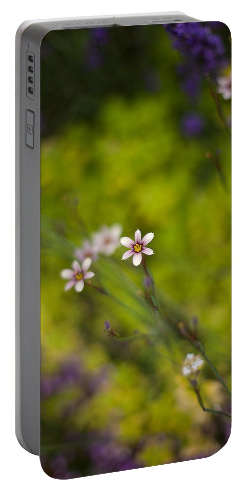 Flower Portable Battery Charger featuring the photograph Delicate Flowers by Mike Reid