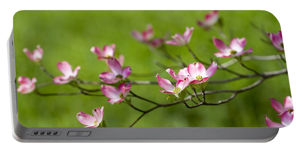 Cornus Florida Portable Battery Charger featuring the photograph Delicate Pink Dogwood Blossoms by Kathy Clark