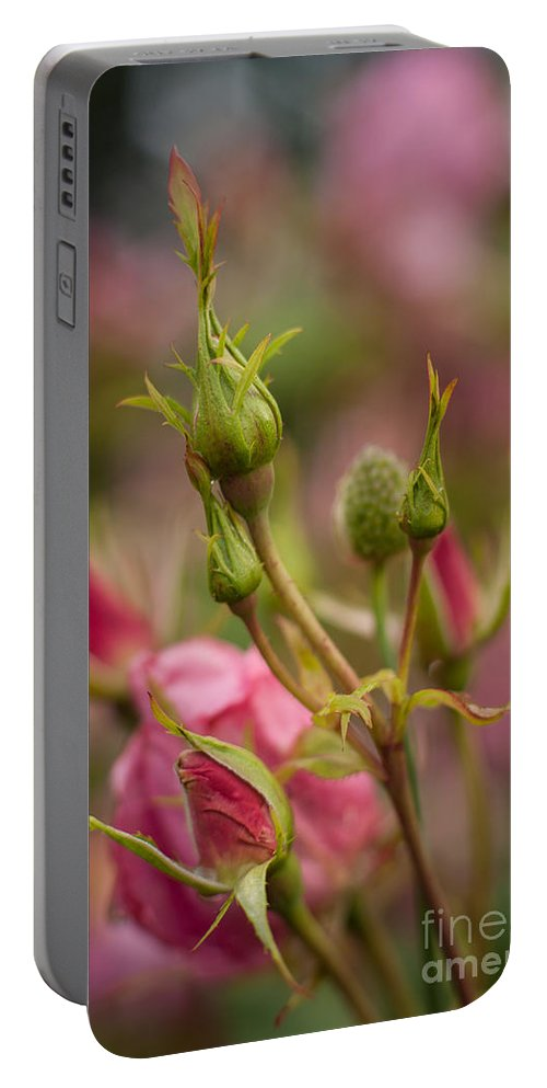 Flower Portable Battery Charger featuring the photograph Delicate Renewal by Mike Reid